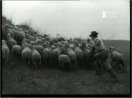 Sardegna agricola, 1952, fotogramma